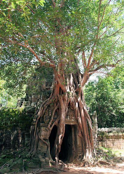 タ・ソム、絞殺しの樹と美しいデ...