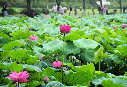 孤山(杭州・西湖)−アジア写真帳